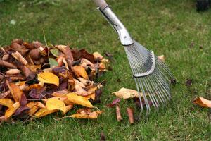 Précieuses feuilles mortes